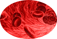 sangrexweb